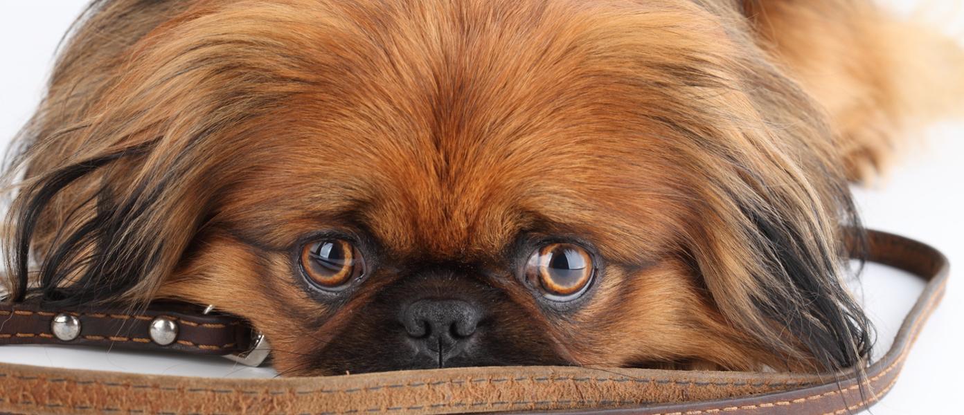 slider-perro