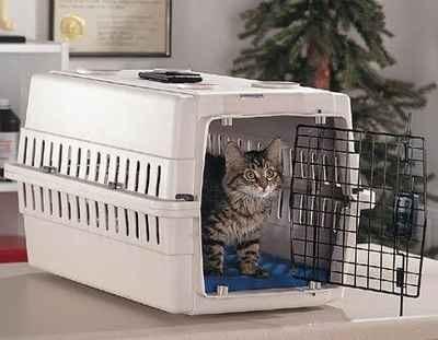 El-gato-en-una-jaula-de-transporte