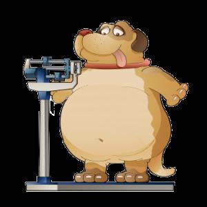 perro-gordo1